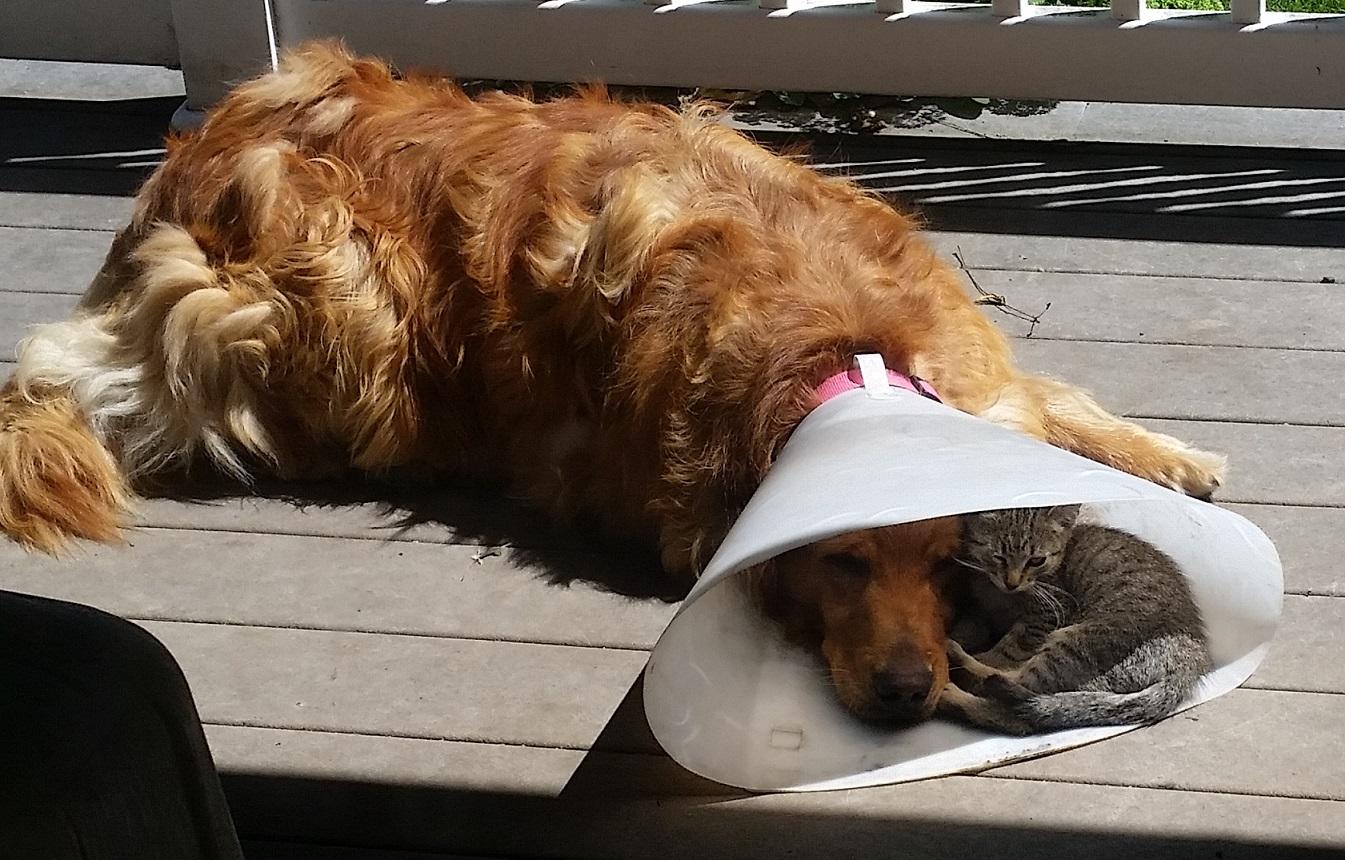 Imagem do dia: � bom ter um amigo em um momento de depress�o