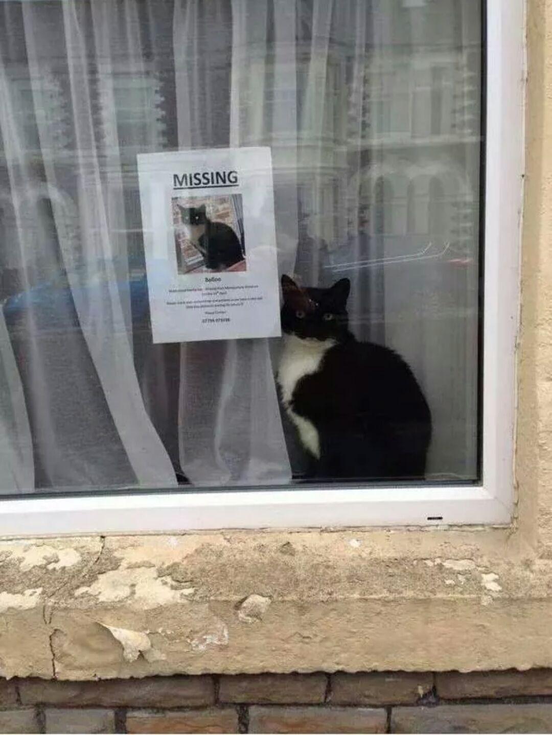 """Este gato perdido apareceu perto de seu próprio cartaz de """"gato perdido"""""""